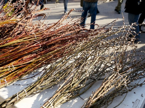 Take home an entire bunch of pussy willows from your local Greenmarket