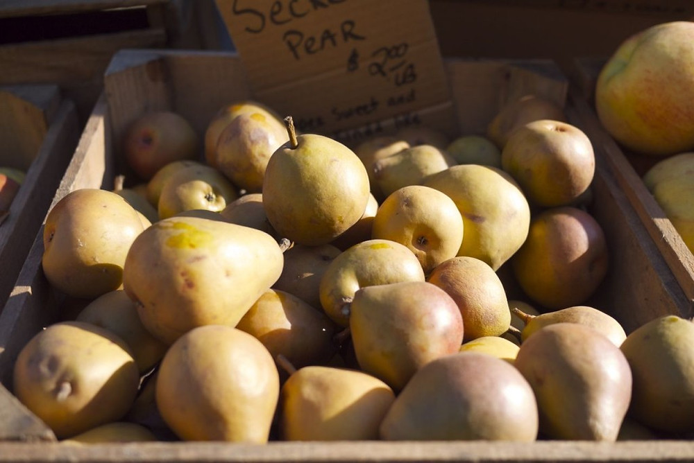 Sekel Pears from Locust Grove Fruit Farm