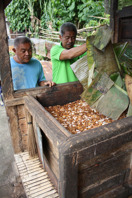 Farmers in the Philippines with harvested cacao beans