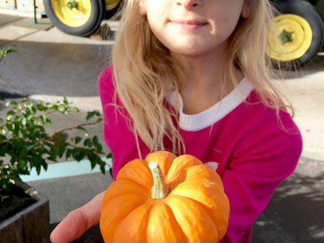 Halloween Market Picks + The First Holiday Market Opens