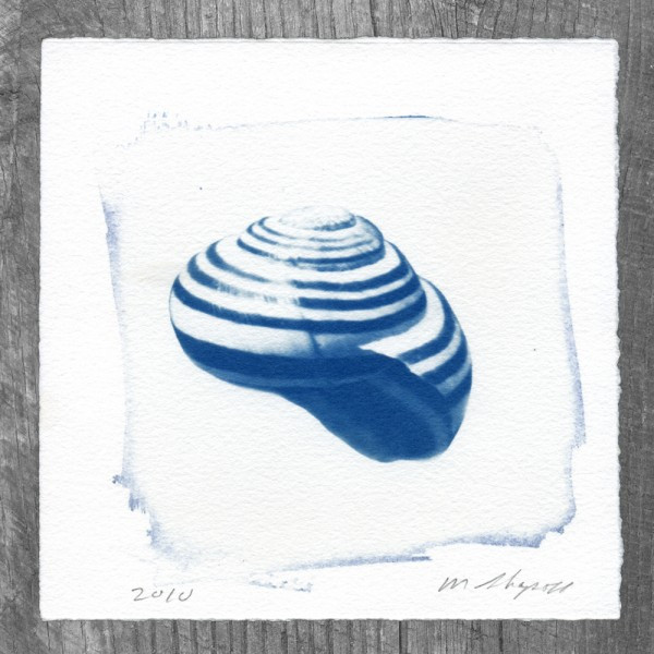 Snail Cynotype Print by Matt Shapoff
