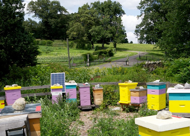 Stone Barns Center Apiaries