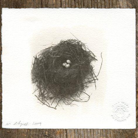 Matt Shapoff Van Dyke Brown Nest Print