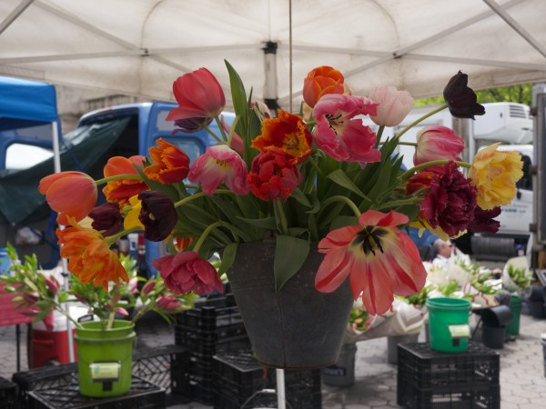 I look forward to seeing this bucket of tulips every year!