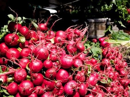 Ravishing Radishes in Our Summer Markets