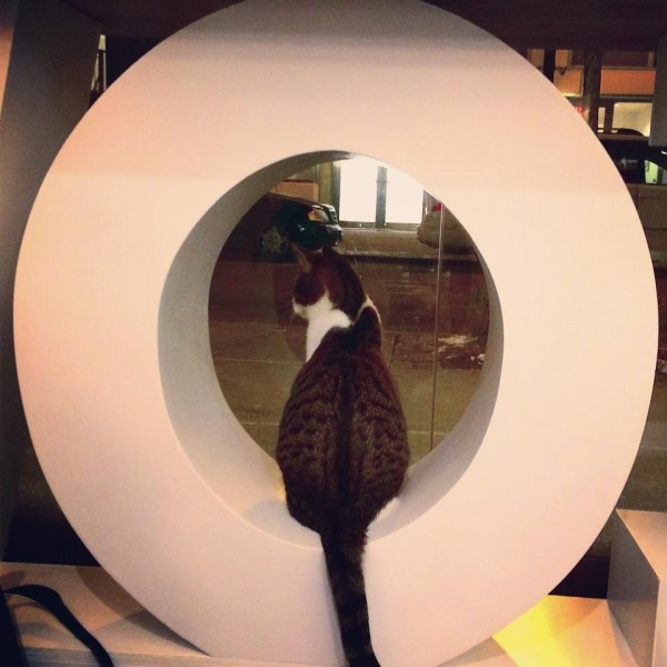You Put the O in Meow. Or Is It The Meow in O?