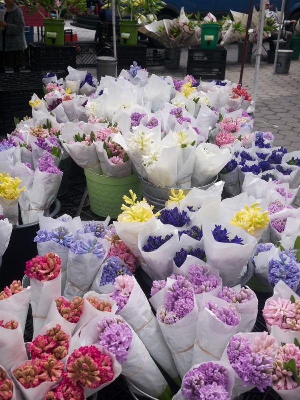 Hiya, Hyacinths!