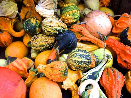 Weekend Market Picks October 10, 11 & 12, 2014: Glorious Gourds