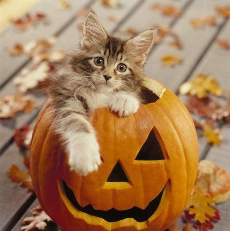 Kitty Pumpkin