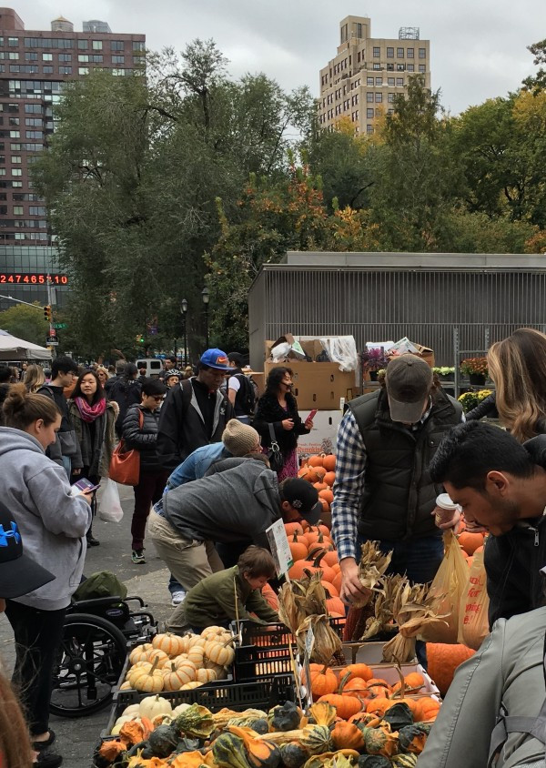 New Yorkers love their pumpkins and Indian corn