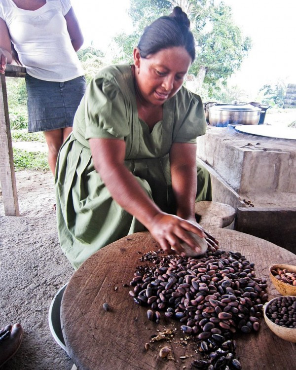 Harvesting the cacao beans in Belize