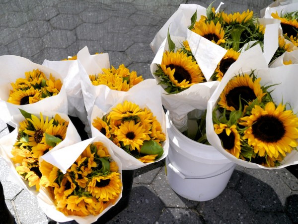 The River Garden prepares sunflower bouquet at the Union Square Greenmarket