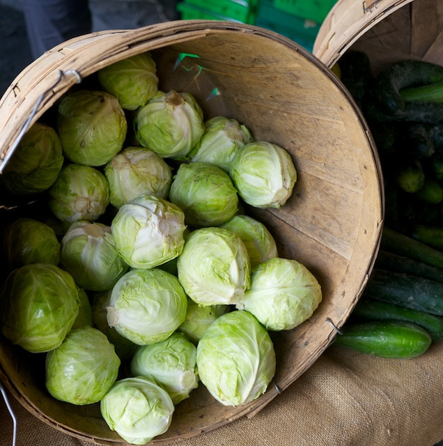 Barrel of fresh cabbages