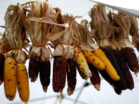 Indian Corn: Pop It, Boil It or Hang It On Your Door
