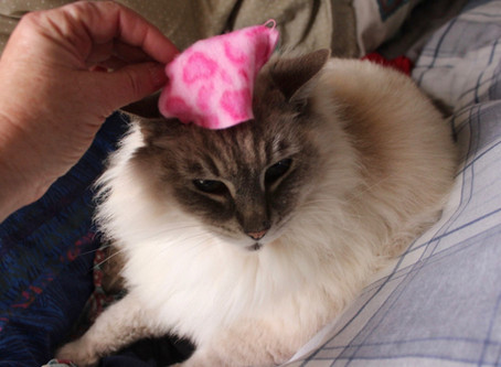 Show Us Your Handmade Pink Pussy Hats