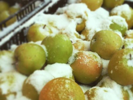 Weekend Market Picks March 7 & 8, 2015: Snowy Green Apples