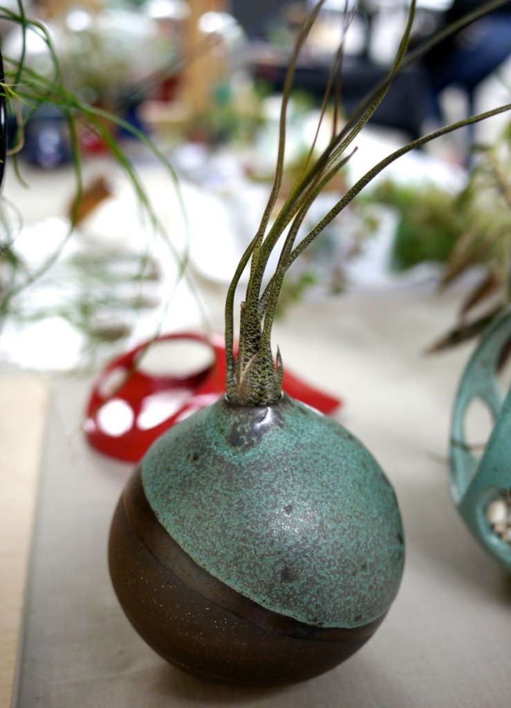 Vase with Airplant by Kamspots