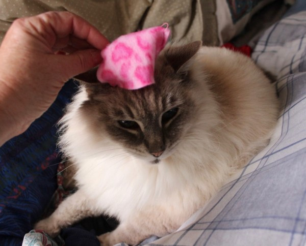 My sister made Opal her own hat