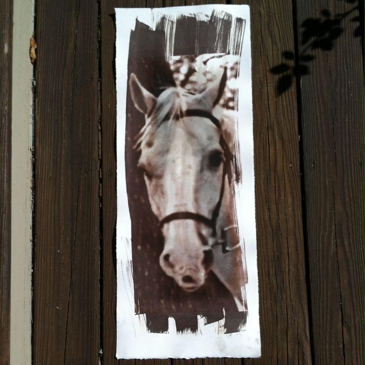 Matt Shapoff's Van Dyke Brown Horse Head Print