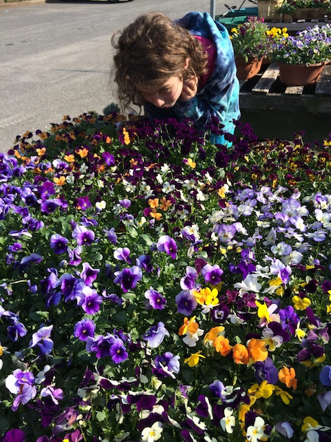 My adorable niece among the fragrant pansies