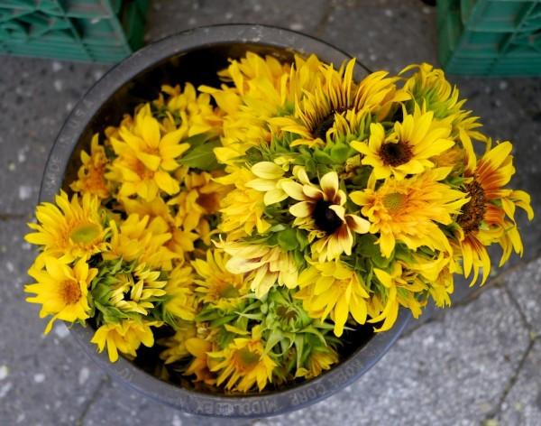 Beauty in a bucket on a sidewalk in New York City