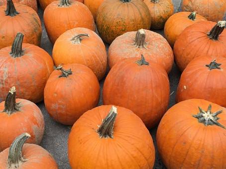 Weekend Market Picks October 7 & 8, 2017: Sugar Pumpkins