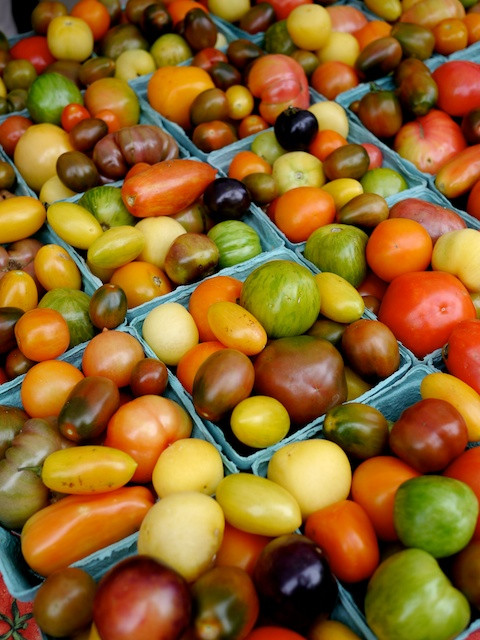 Fall Heirloom Tomatoes