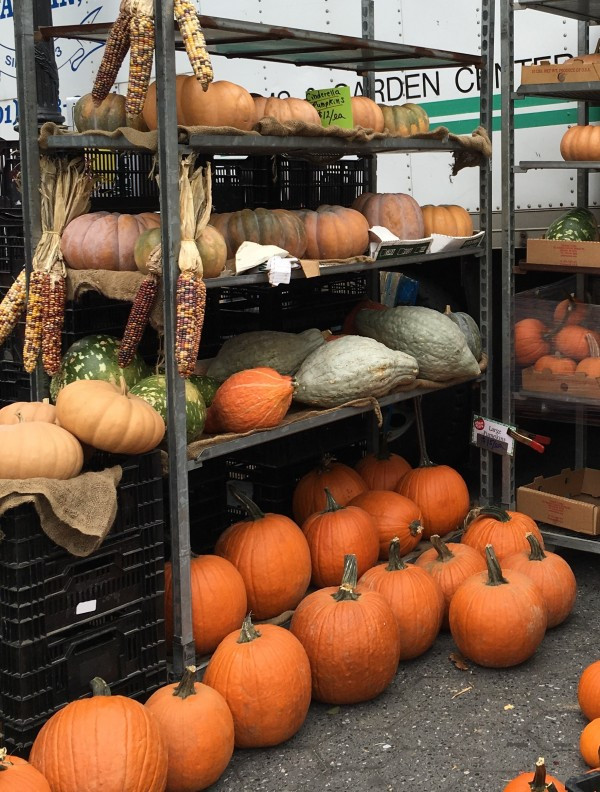 Pumpkins, Squashes and Gourds - Oh My!