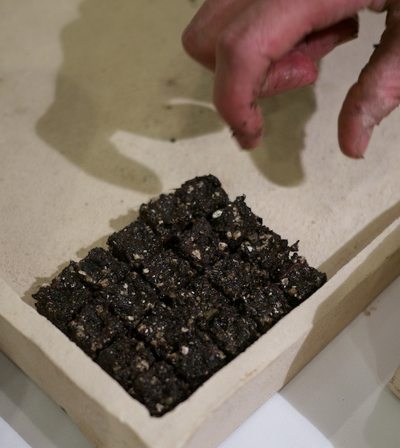 Rooftop Seeds - Each little square of dirt will grow a seedling