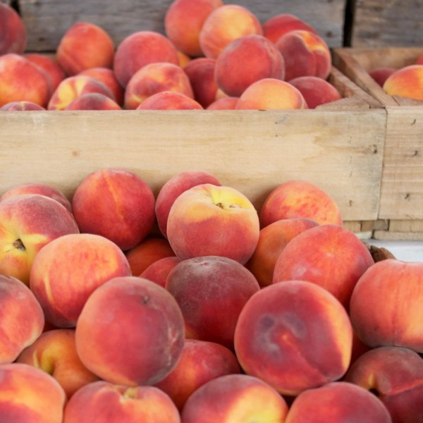 The peaches are just getting big and juicy