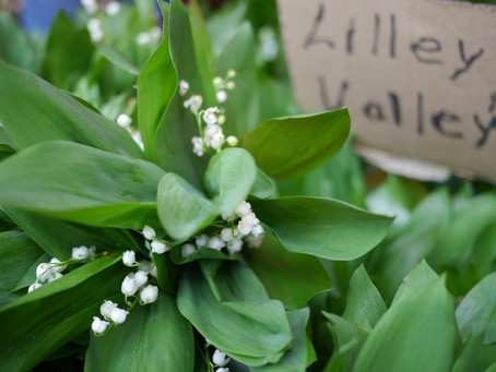 Cool Market Photo: Lillies of the Valley from John Durr Farm