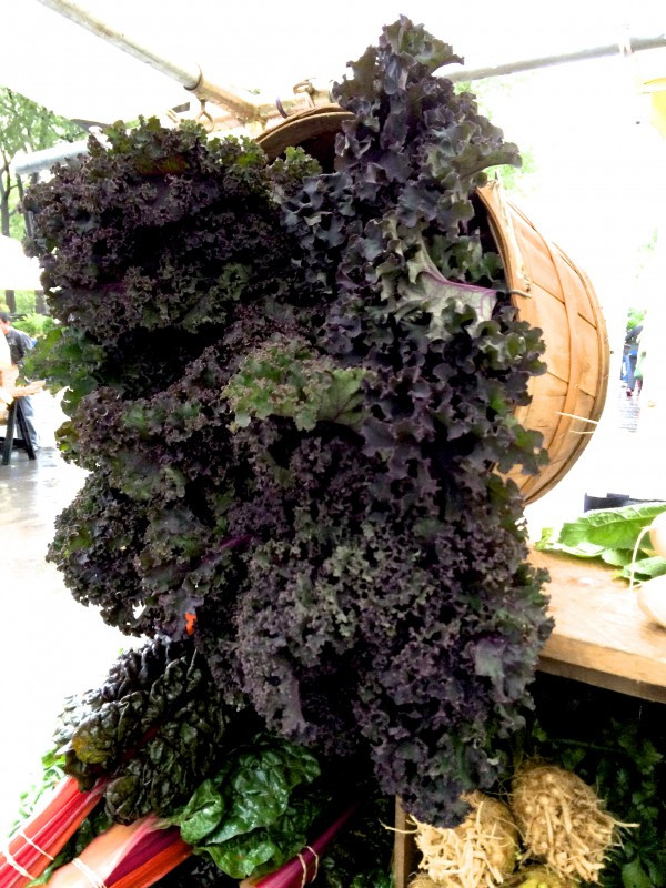 Cascade of Purple Kale from Tamarack Hollow Farm