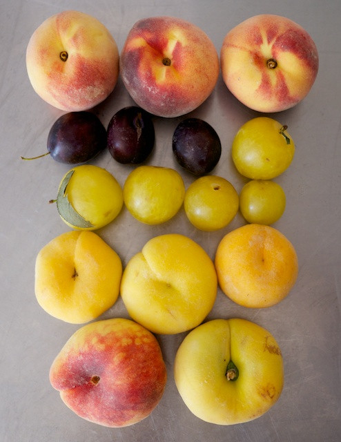Peaches and Plums from Red Jacket Orchards at the Greenmarket