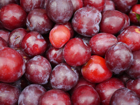 Bite Into A Gorgeous Santa Rosa Plum from Caradonna Farms