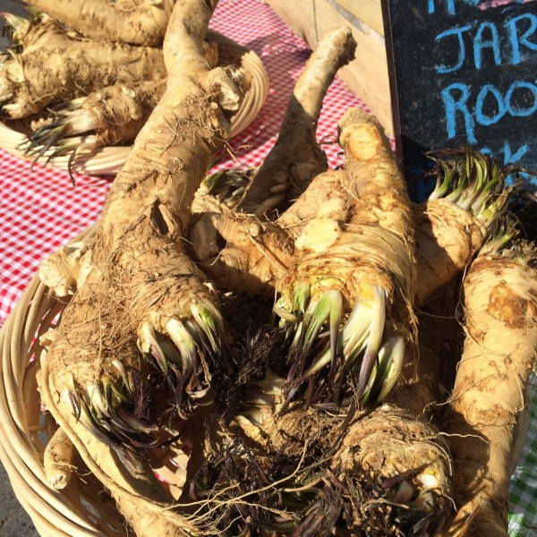 This is what fresh horseradish roots look like