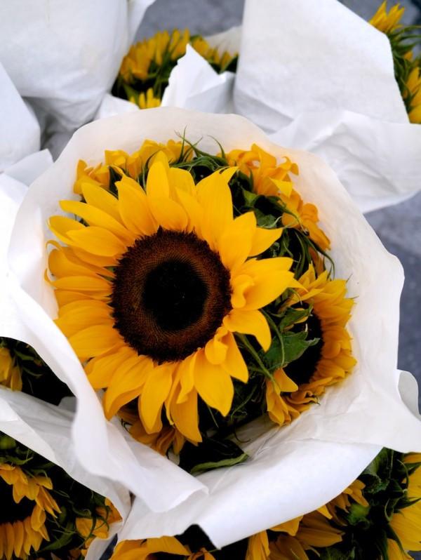 Giant Sunflower from The River Garden