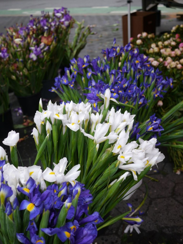 Purple and White Irises from James Durr Farm at Union Square Greenmarket