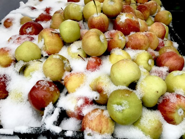 Snow Covered Apples in a Wintery Market