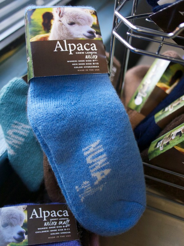 WIN Alpaca Socks by Nuna Knits