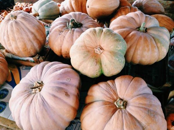 Turkish Pumpkins