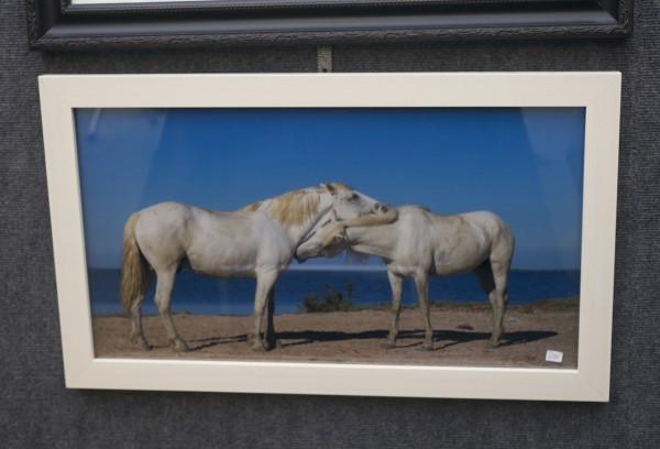 Patty Murray Photography Horses