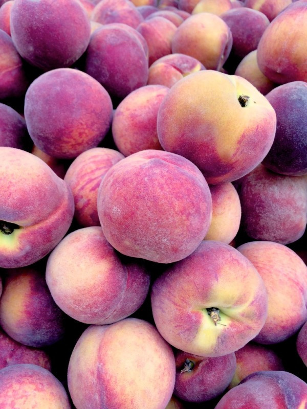 Kernan Farm Peaches at the Union Square Greenmarket