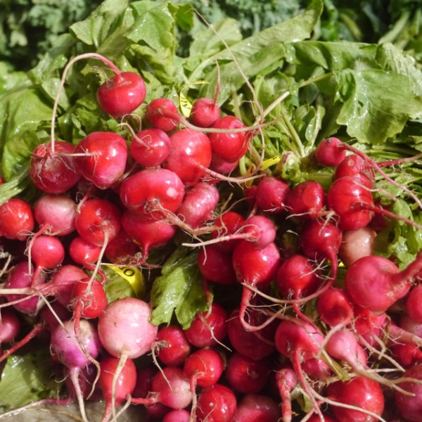 Bright red radishes in the Greenmarkets