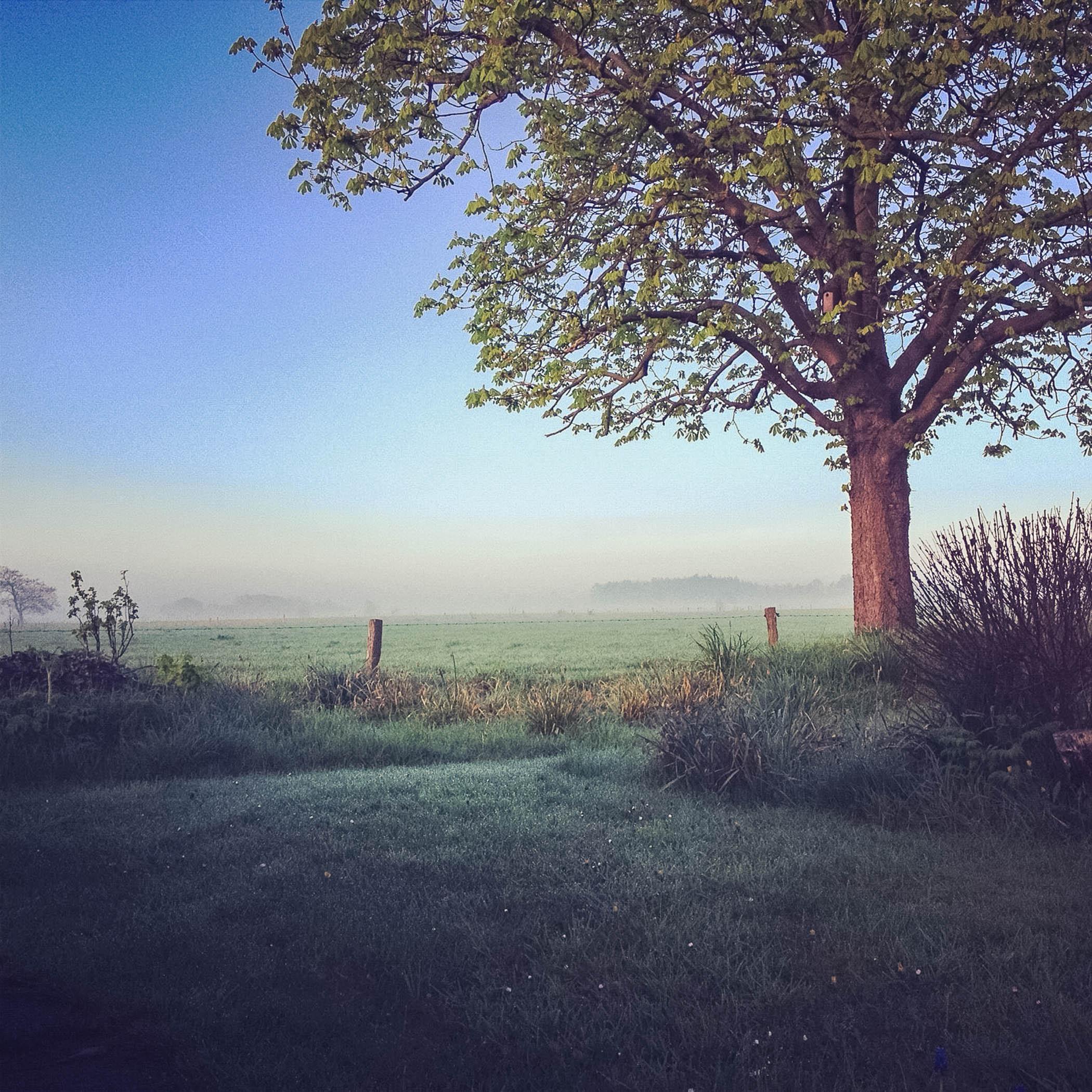 Morgengrauen in der Großheide
