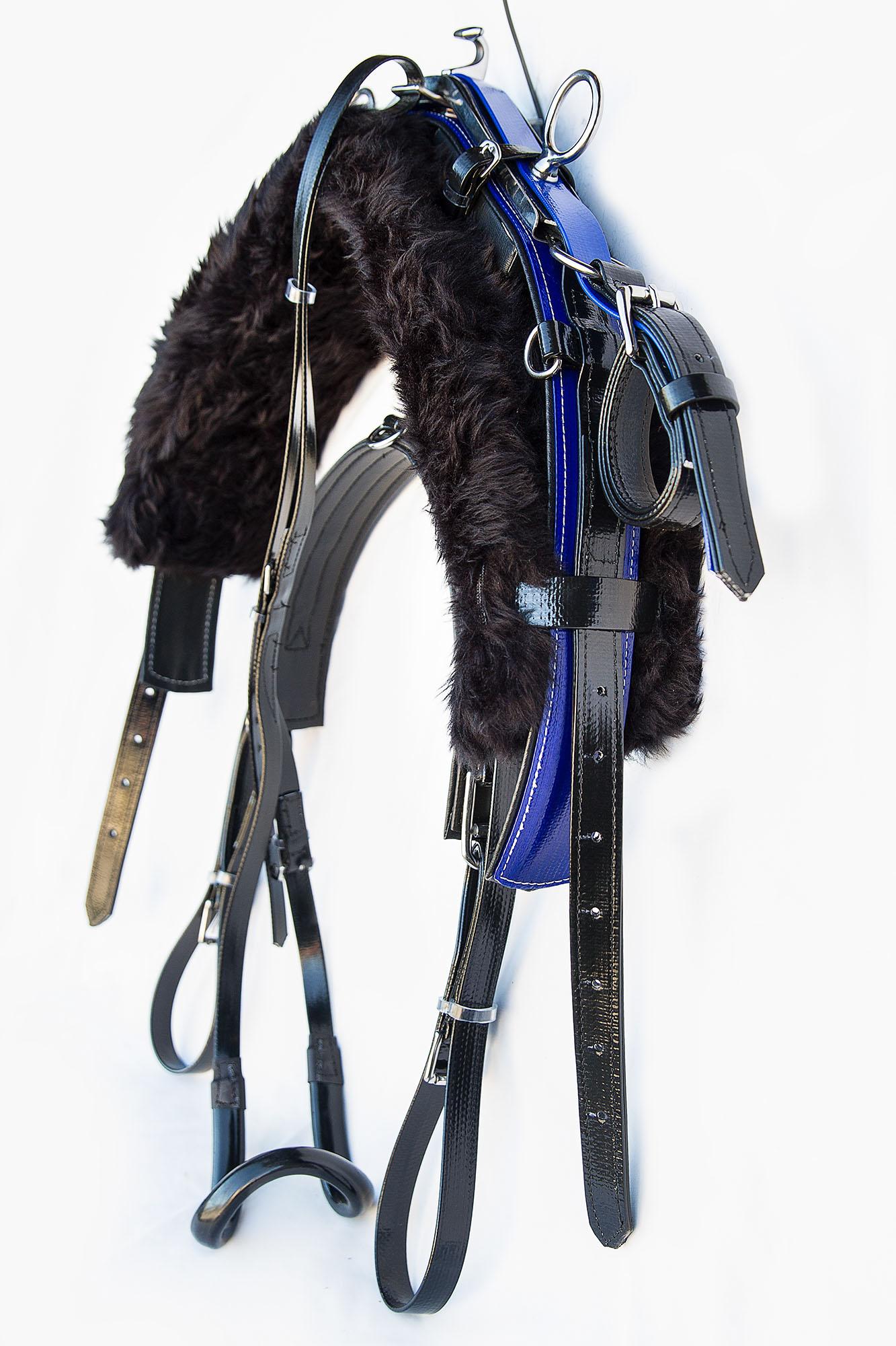 Harness-TD-Black-Blue  05.jpg
