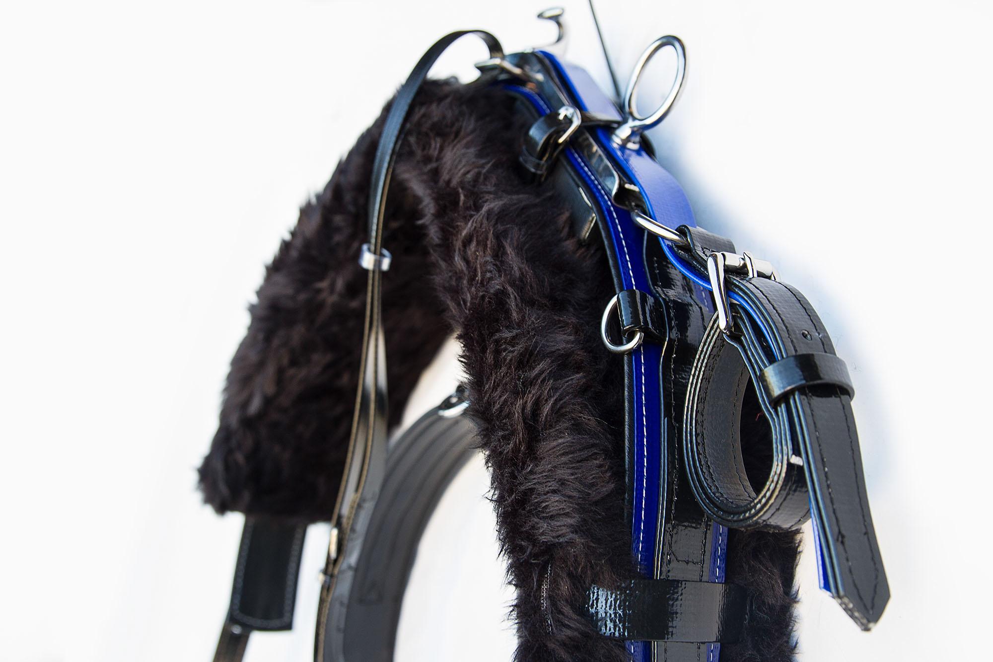 Harness-TD-Black-Blue  04.jpg