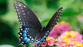 La mariposa y el grillo