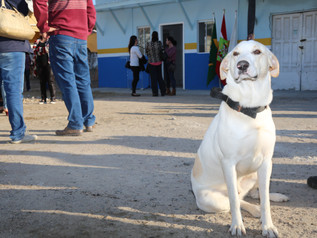 1º Centro de bem-estar animal é inaugurado