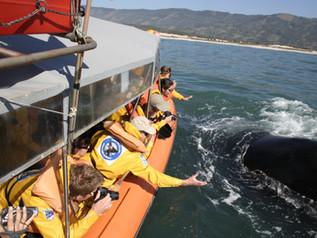 Portaria do Ministério do Meio Ambiente liberaobservação embarcada de baleias no litoral catarinens
