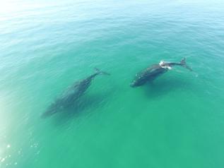 Caça as baleias é rejeitada